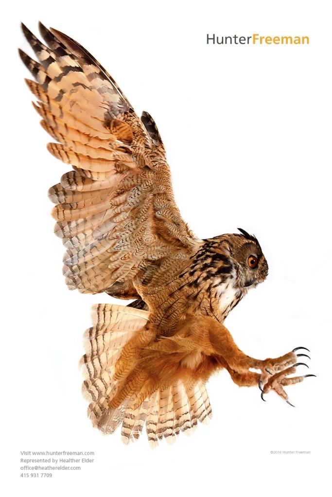 HF.owl
